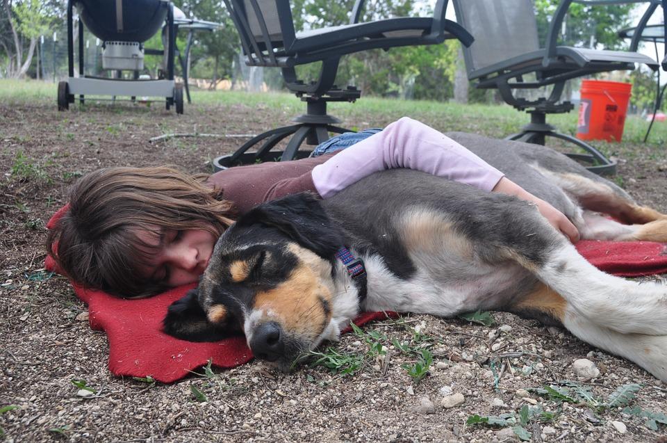dog-and-nap