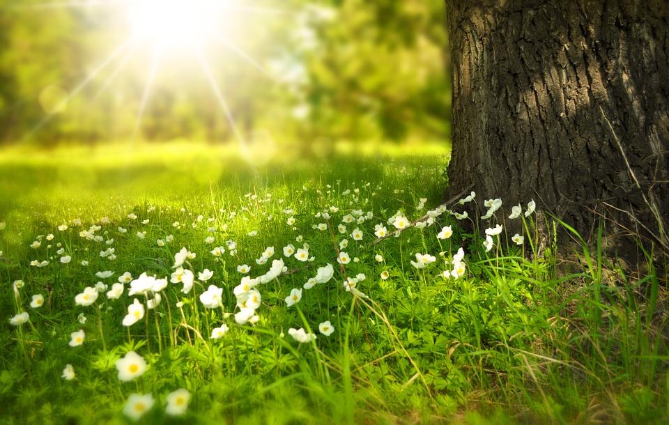 spring_tree_flowers