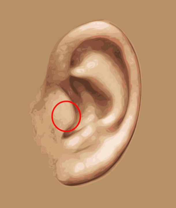 ear-tragus